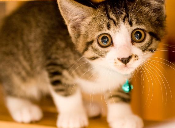 ペット系のブログ(犬・猫・魚・鳥など)で稼いでいく方法は?